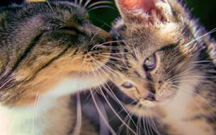 Katze Körperpflege