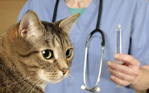Katzen Schutzimpfung
